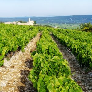 french wine dinner foxcroft wine charlotte