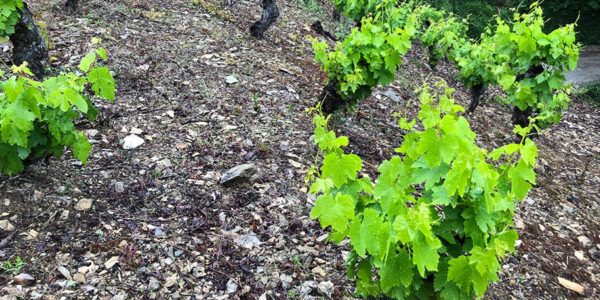 spanish wine dinner foxcroft southpark august