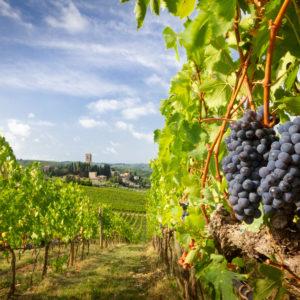 tuscan wine dinner foxcroft wine co southpark